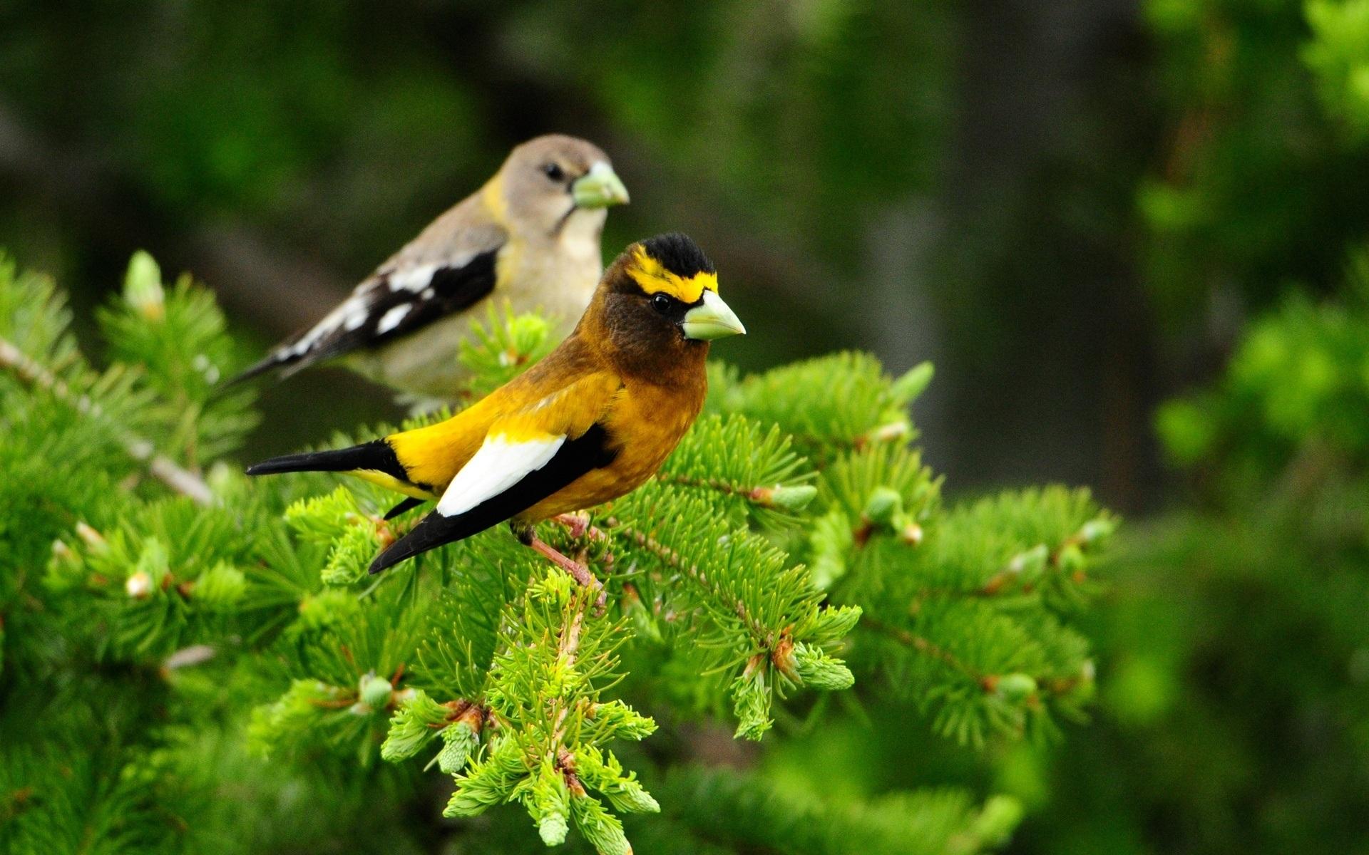 Birds With Green Beaks